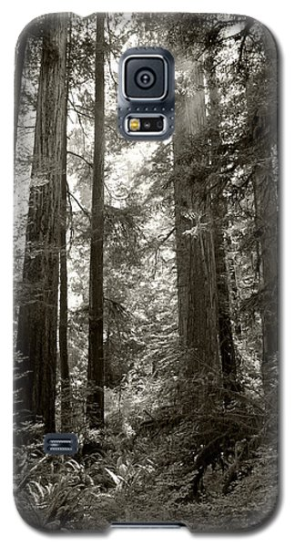 Light Through Redwoods Galaxy S5 Case
