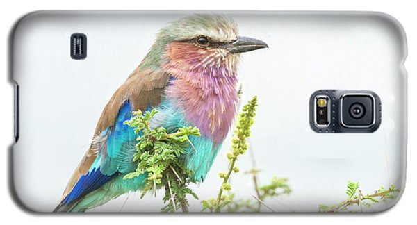 Lilac Breasted Roller. Galaxy S5 Case