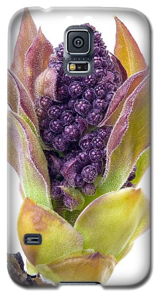 Lilac Bud Galaxy S5 Case by Jim Hughes
