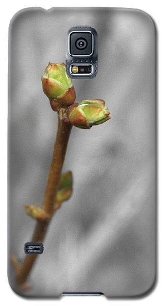 Lilac Bud Season Galaxy S5 Case