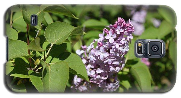 Lilacs 5551 Galaxy S5 Case