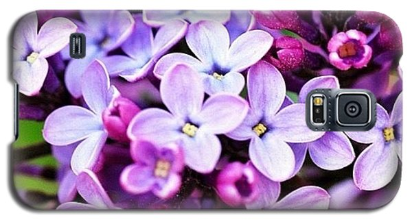 Galaxy S5 Case featuring the photograph Lilacs by Penni D'Aulerio