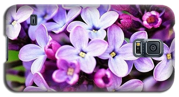 Lilacs Galaxy S5 Case by Penni D'Aulerio