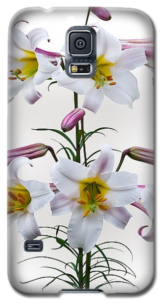 Lilium Regale Galaxy S5 Case