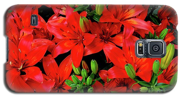 Galaxy S5 Case featuring the photograph Lily Blossoms by LeeAnn McLaneGoetz McLaneGoetzStudioLLCcom