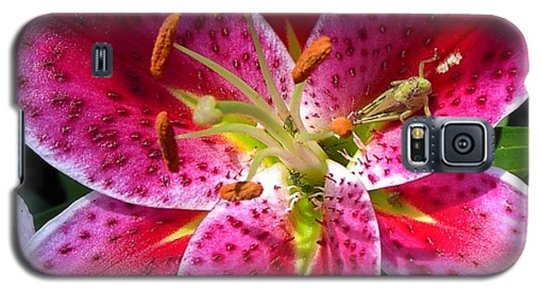 Lily Galaxy S5 Case by Mary-Lee Sanders