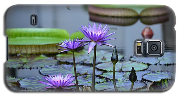 Lily Pond Wonders Galaxy S5 Case