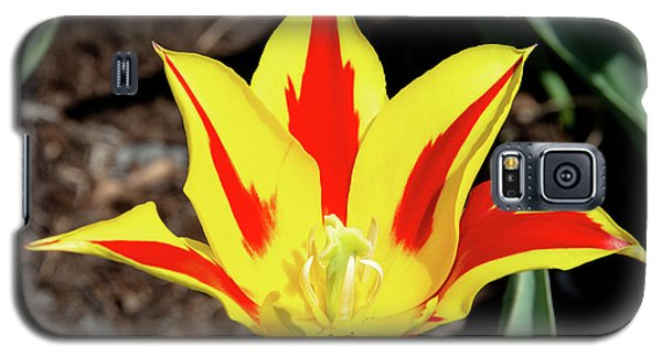 Lily Tulip Galaxy S5 Case