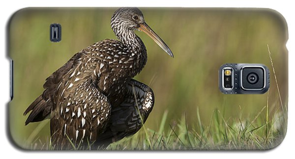 Limpkin Stretching In The Grass Galaxy S5 Case