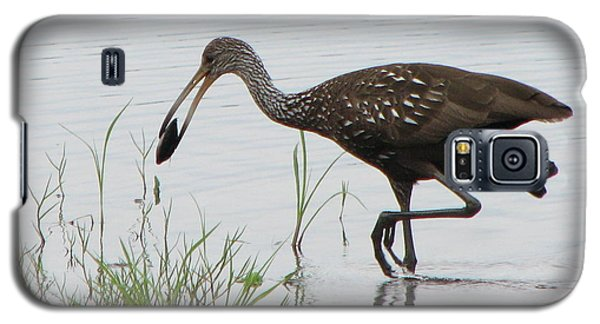 Limpkin With Shellfish Galaxy S5 Case