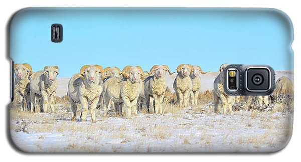 Galaxy S5 Case featuring the photograph Line Em Up Rams by Amanda Smith