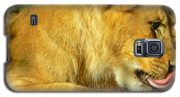 Lion Cub - What A Yummy Snack Galaxy S5 Case by Emmy Marie Vickers