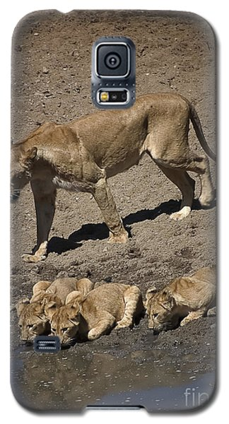 Lion Cubs And Mom Get A Drink Galaxy S5 Case by Darcy Michaelchuk
