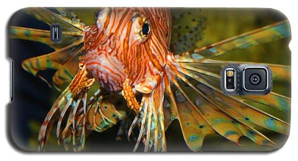 Lion Fish 2 Galaxy S5 Case by Kathryn Meyer