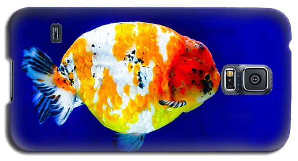 Lion Head Goldfish 3 Galaxy S5 Case