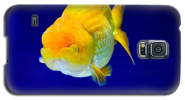 Lion Head Goldfish 5 Galaxy S5 Case