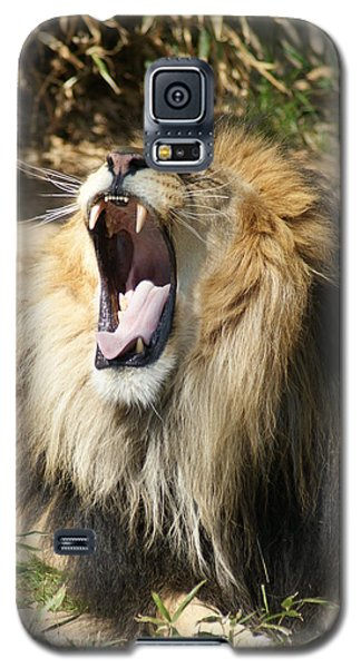 Galaxy S5 Case featuring the photograph Lion by Heidi Poulin