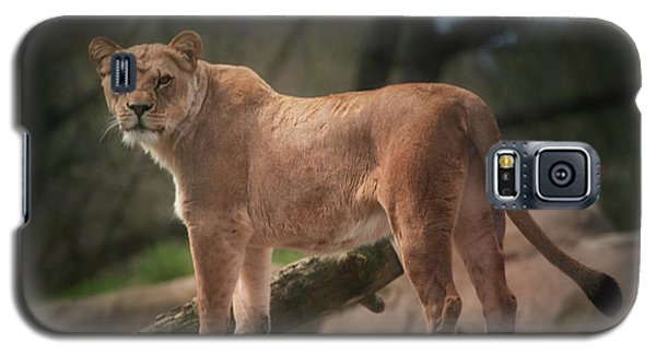 Galaxy S5 Case featuring the photograph Lion by Jacqui Boonstra