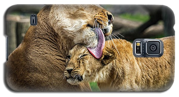 Lion Mother Licking Her Cub Galaxy S5 Case