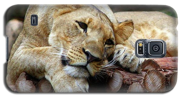Lion Resting Galaxy S5 Case