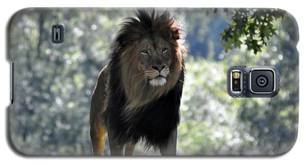 Lion Series 3 Galaxy S5 Case
