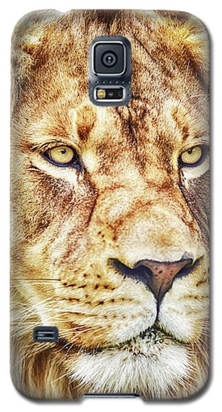 Lion-the King Of The Jungle Large Canvas Art, Canvas Print, Large Art, Large Wall Decor, Home Decor Galaxy S5 Case