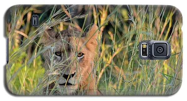 Lion Warily Watching Galaxy S5 Case