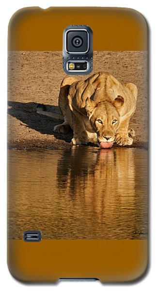 Lioness Drinking Galaxy S5 Case