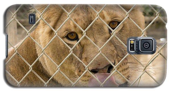 Lioness Licks Galaxy S5 Case