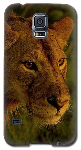Lioness-signed-#6947 Galaxy S5 Case