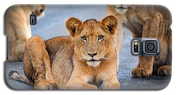 Lions Stare Galaxy S5 Case