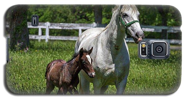 Lipizzan Horses Galaxy S5 Case