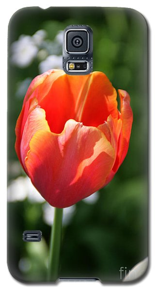 Lit Tulip 02 Galaxy S5 Case