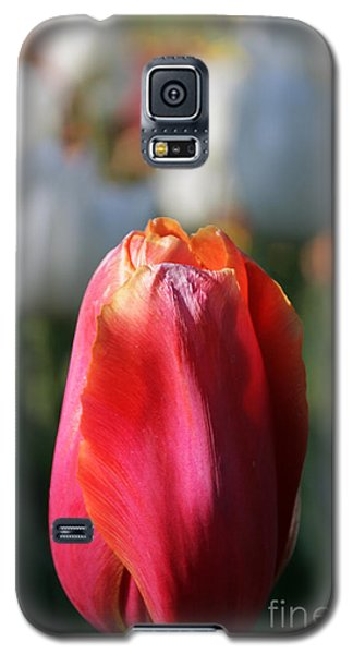 Lit Tulip 03 Galaxy S5 Case