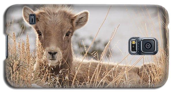 Little Bighorn Galaxy S5 Case
