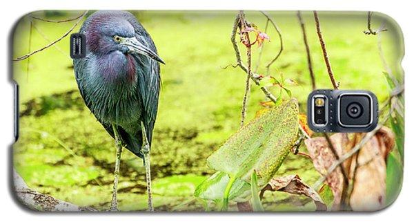 Little Blue Heron At Ollie's Pond Galaxy S5 Case