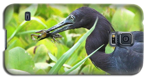 Galaxy S5 Case featuring the photograph Little Blue Heron Catches A Frog by Barbara Bowen