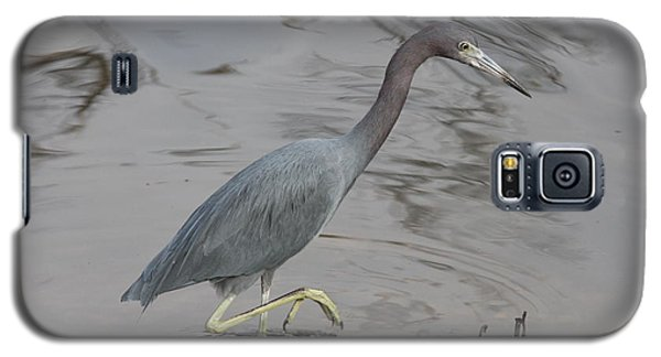 Galaxy S5 Case featuring the photograph Little Blue Heron Walking by Christiane Schulze Art And Photography