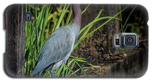 Galaxy S5 Case featuring the photograph Little Blue Under Bridge by Robert Frederick