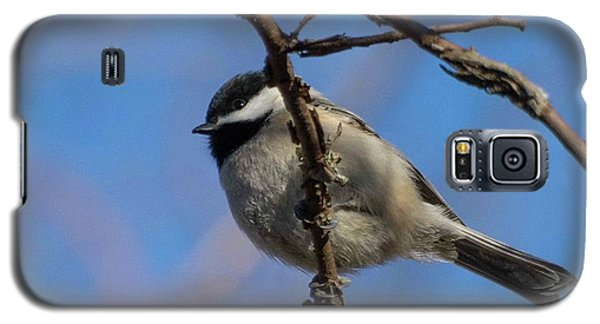 Little Chickadee Galaxy S5 Case