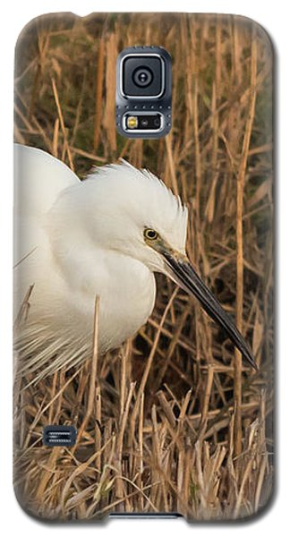 Little Egret Concentrating Galaxy S5 Case