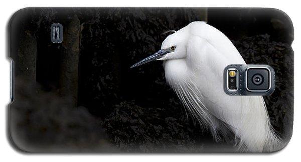 Little Egret Galaxy S5 Case
