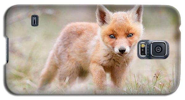 Little Fox Kit, Big World Galaxy S5 Case