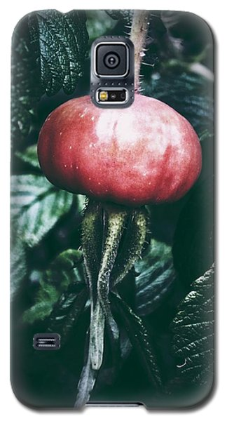Galaxy S5 Case featuring the photograph Little Lady Rosehip by Karen Stahlros