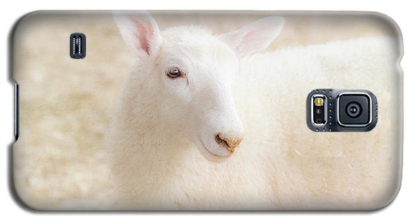 Little Lamb Galaxy S5 Case