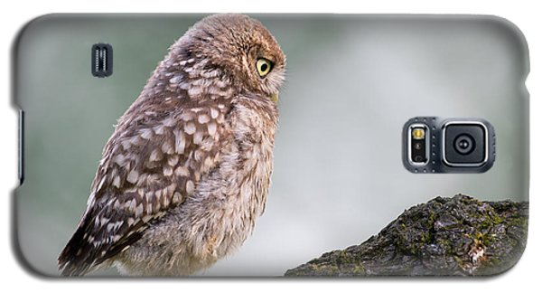 Little Owl Chick Practising Hunting Skills Galaxy S5 Case by Roeselien Raimond