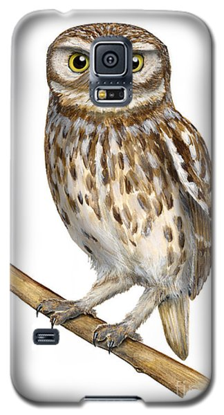 Little Owl Or Minerva's Owl Athene Noctua - Goddess Of Wisdom- Chouette Cheveche- Nationalpark Eifel Galaxy S5 Case