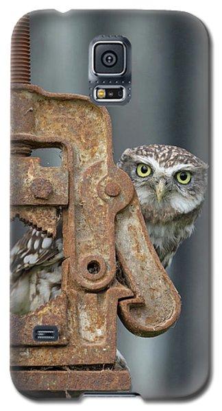 Little Owl Peeking Galaxy S5 Case