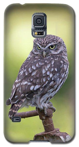 Little Owl Pipe Bender Galaxy S5 Case