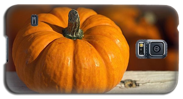 Little Pumpkin Galaxy S5 Case by Joseph Skompski